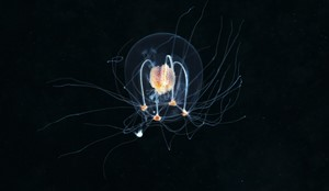 Why the deep ocean matters